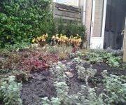 Beplanting tuin Waddinxveen